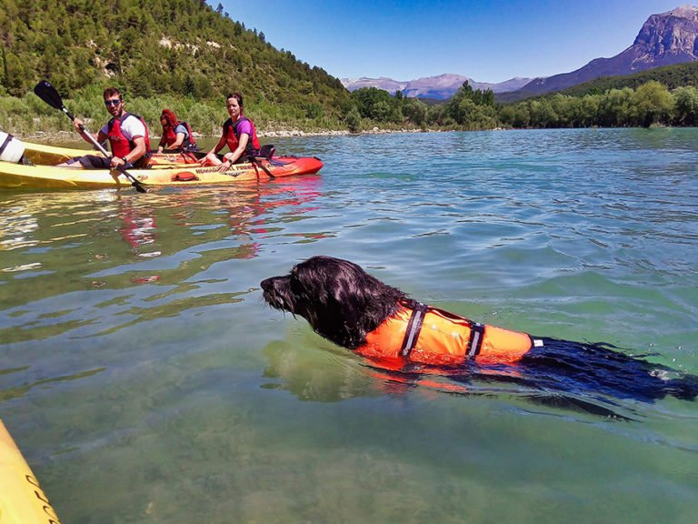 kayak-perros-03